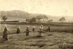 Beringen Bahnuebergang Haegli Erntezeit